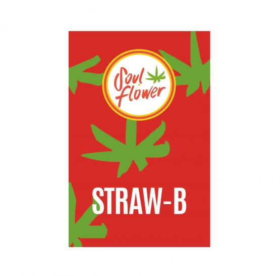 straw-b-infiorescenze