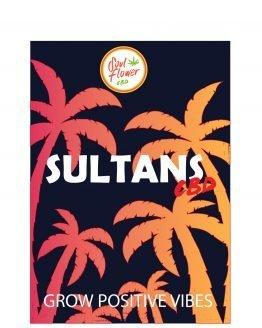 sultans-alto-cbd